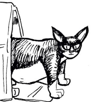 pablo_cat